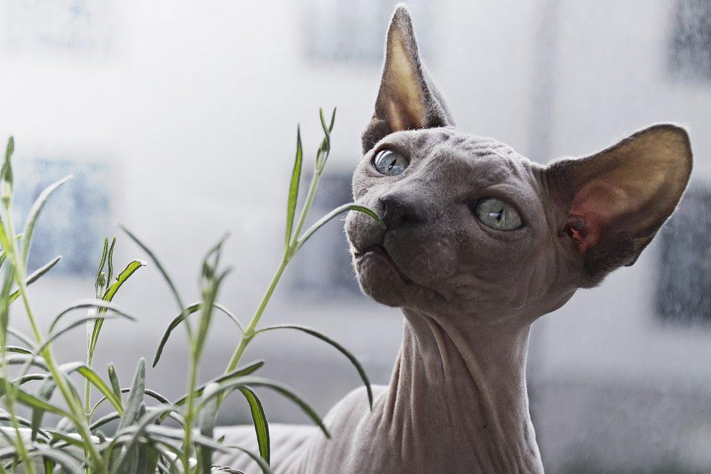 kot wąchający liście warszawa hotel dla kotów