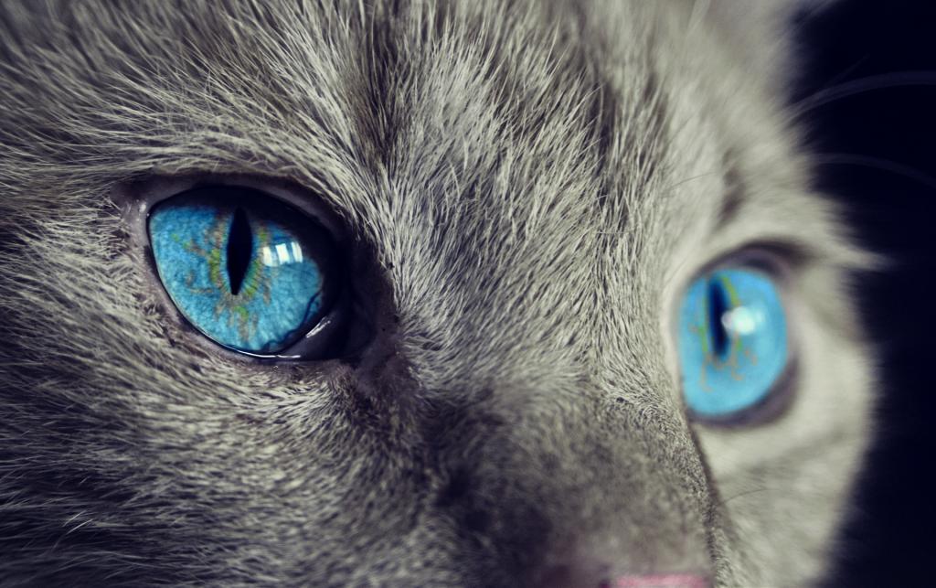 niebieskie oczy koci hotel warszawa