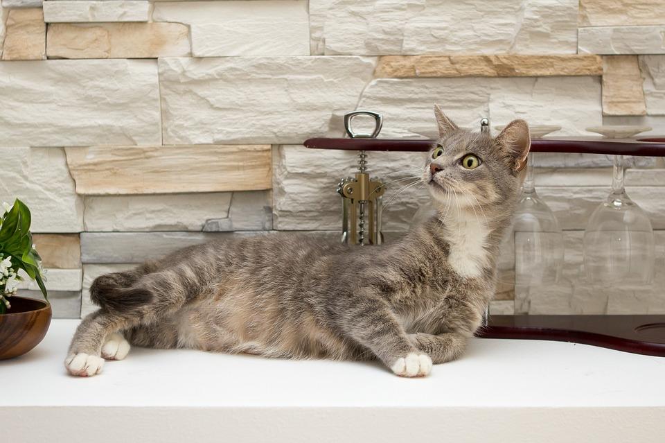 leniwy kot hotel dla kotów warszawa