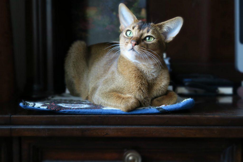 leżący kot hotel dla kotów warszawa