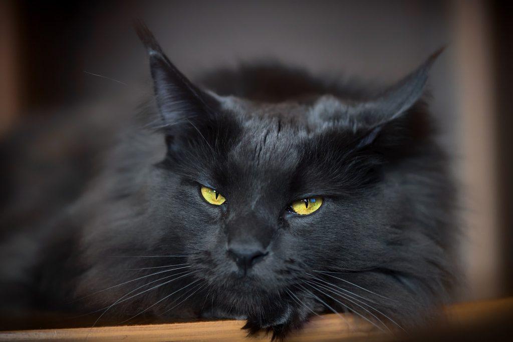 czarny kot hotel dla kotów cennik
