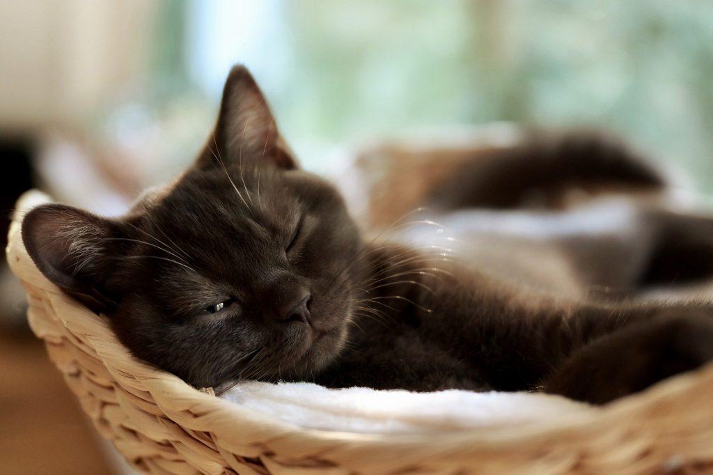 mały kotek hotel dla kotów cennik